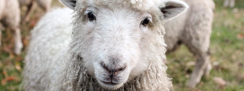 Jesus the Lamb as if Slain